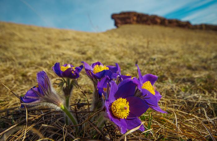 Весна в хакасии фото чем отправиться
