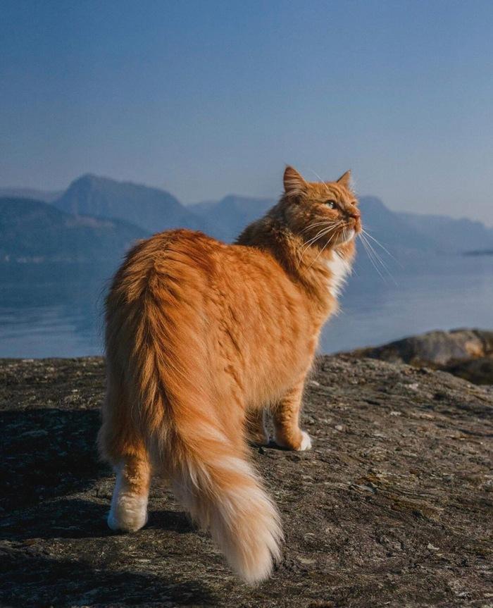 Король Кот