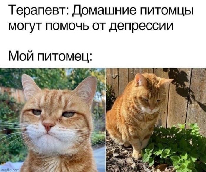 Кот грузится вместе с тобой