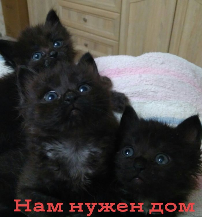 Котята-чернята в Приморско-Ахтарске