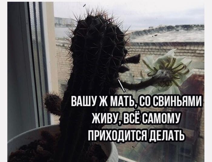Когда кактусу надоели грязные окна