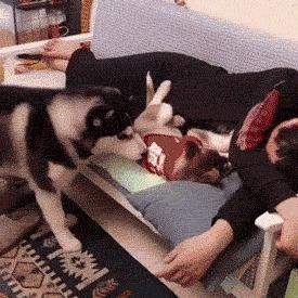 Терапевтическая собака (Гифка с предысторией) Kat Swenski, Комиксы, Гифка с предысторией, Перевод, Перевел сам, Гифка, Длиннопост, Собака