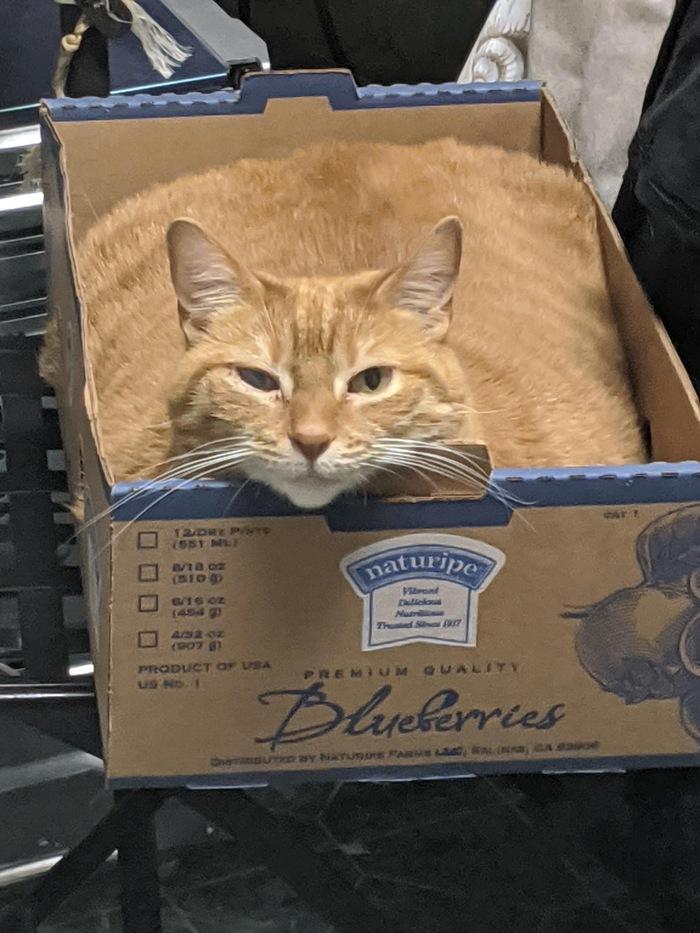 Кота налили в коробку