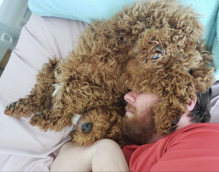 """""""Спустя 3 года я уговорила мужа завести пса. Он согласился при условии, что щенку нельзя залезать на кровать. Теперь каждое утро я вижу это"""""""