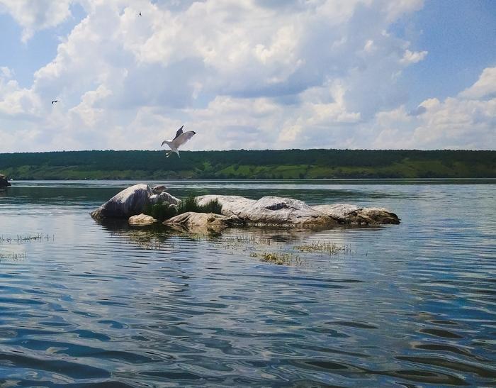 Тролль, лежащий в воде