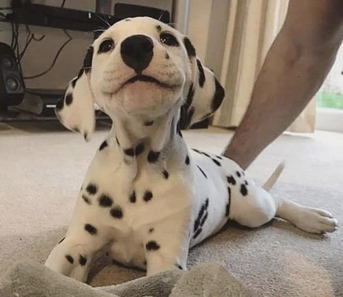 До чего же милая улыбка!