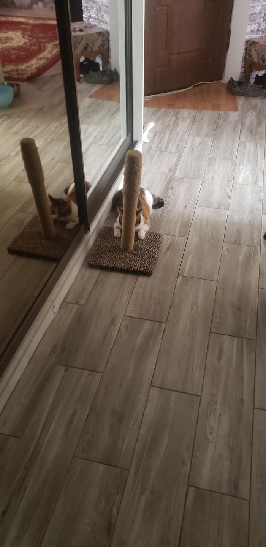 Я ищу кота, который нагадил в тапкиКот