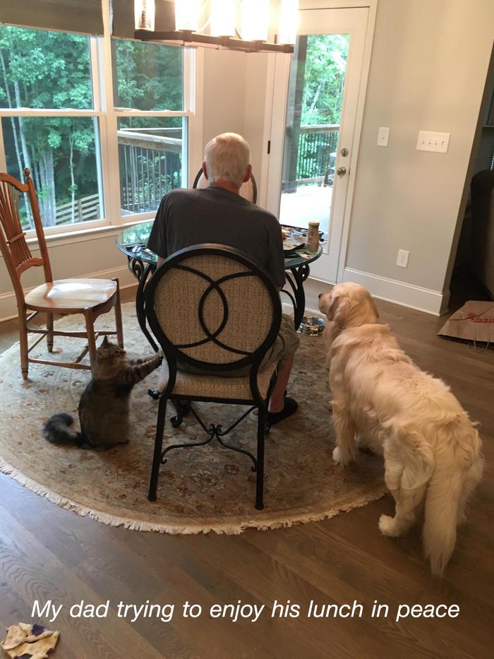 Мой папа пытается насладиться спокойным обедом