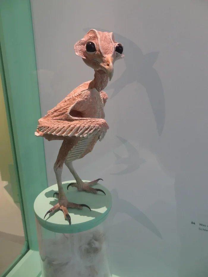 Голая (лысая) сова