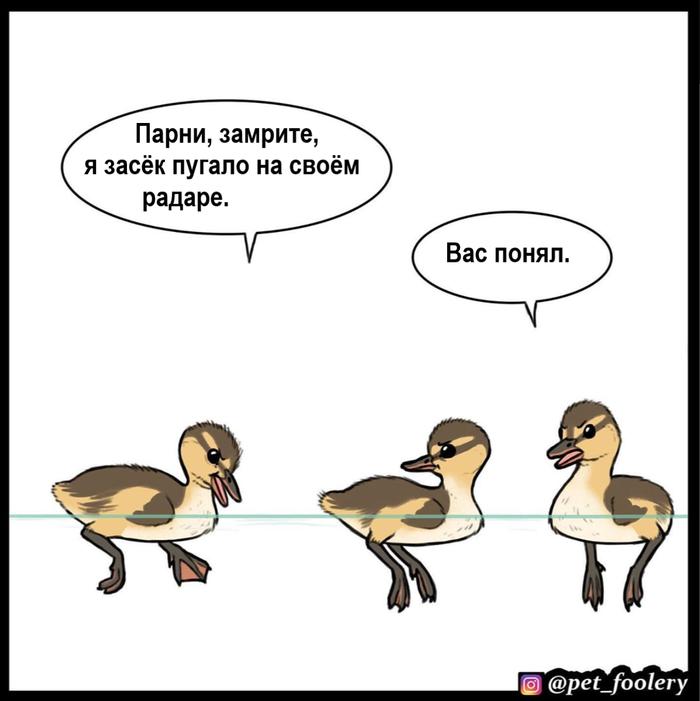 Утята