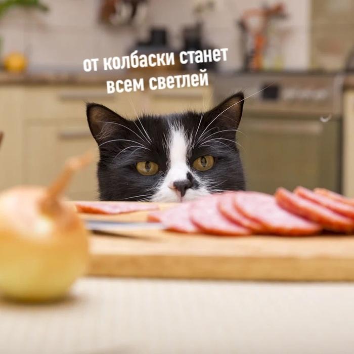 Кот и колбаска