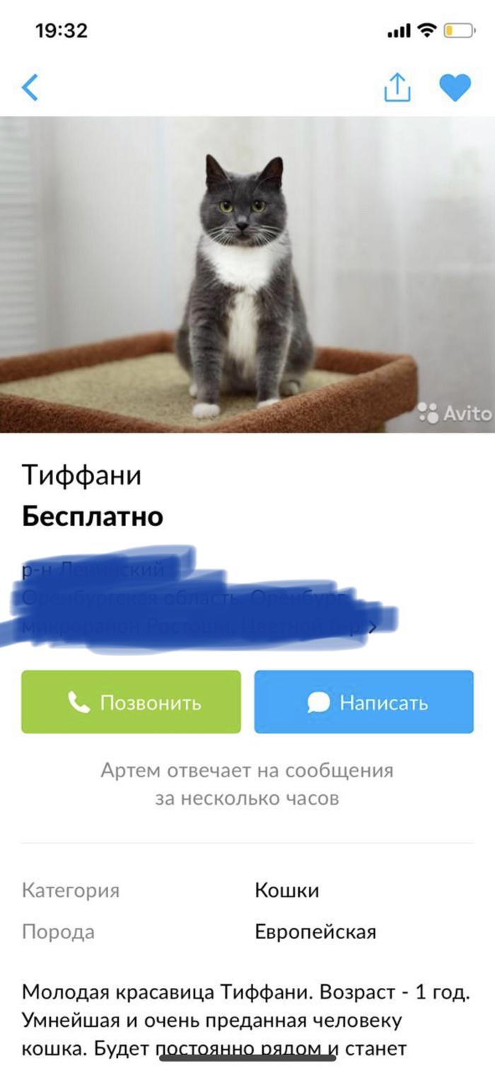 Кошкосчастье