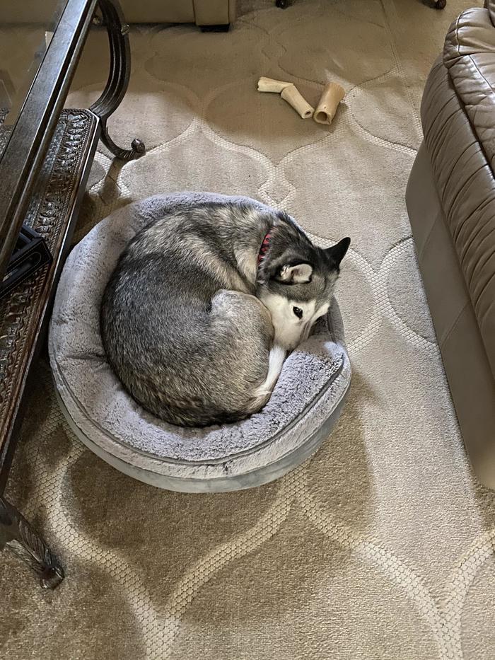 """""""Купил новую лежанку для своего кота. Теперь, видимо, придется заказывать ещё одну"""""""