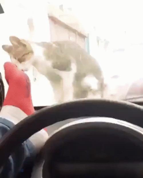 Уходи, кот!