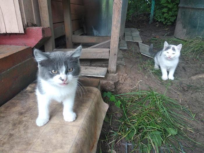 Москва и область Кошка с котятами ищет дом