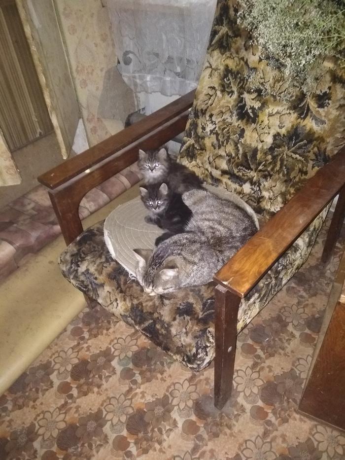 Срочно нужен дом кошке и котятам!