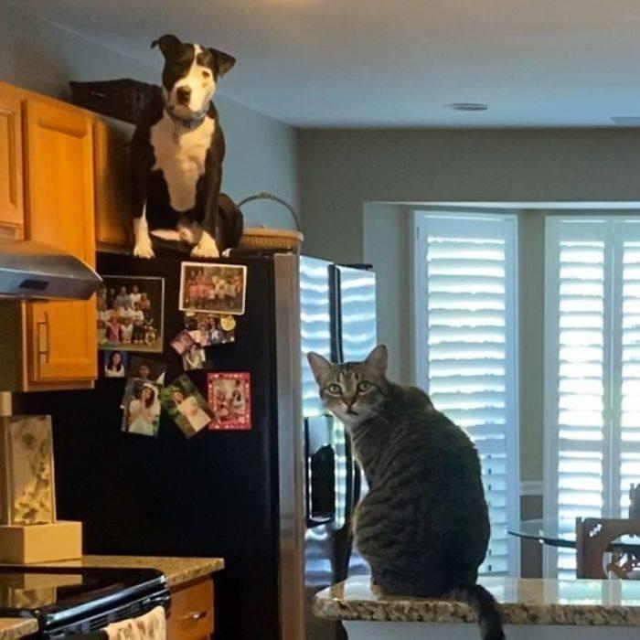 """""""Так, хозяин, я чего-то не понял, ты зачем привел в дом ещё одного кота?"""""""