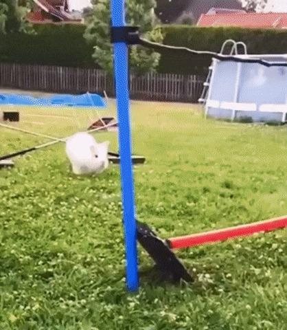 Вперёд, кролик!