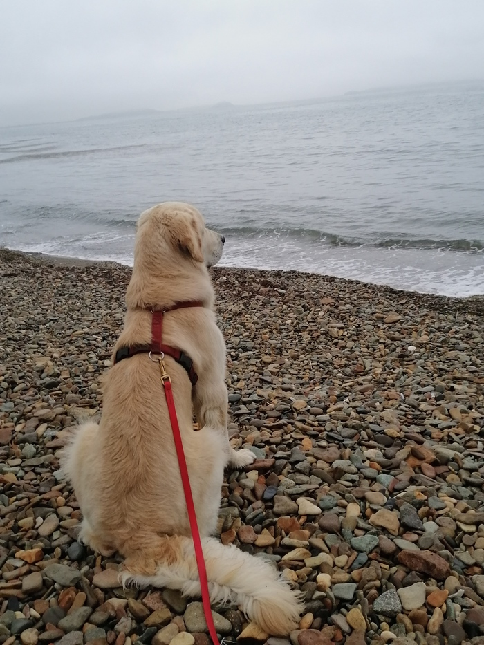 Умейте слушать море