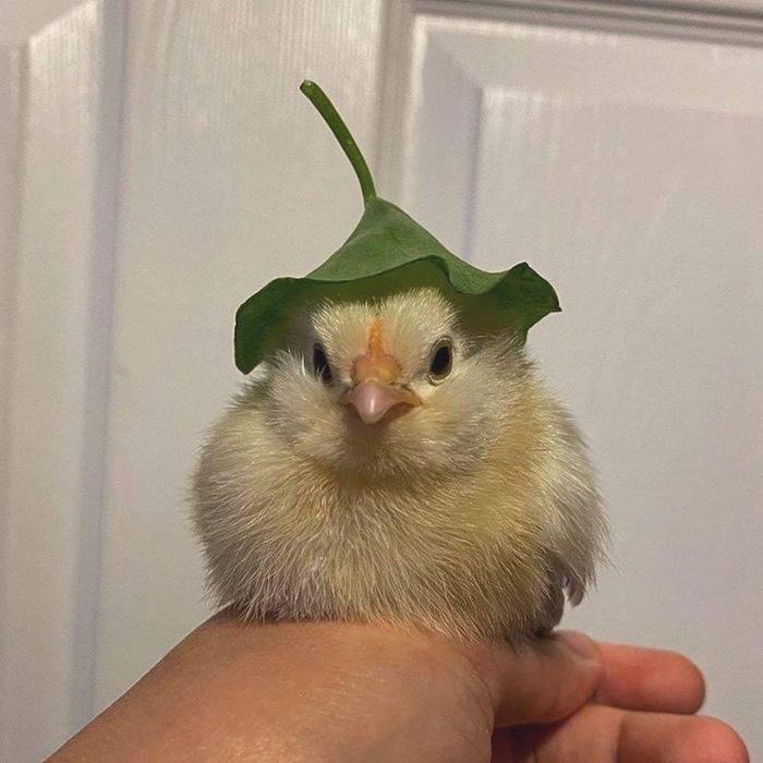 Я в шапочке