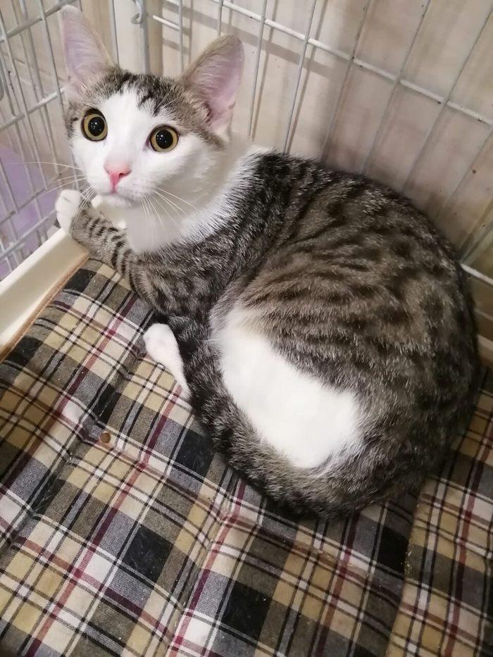 QuotПозаботилисьquot о котенке, принеся на прививки и бросив в клинике...