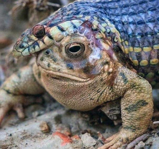Змейка умершая при попытке съесть ядовитую лягушку