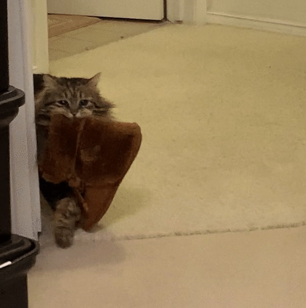 «Мама завела кота, который каждое утро приносит ей тапочки. Не верил, пока она не прислала мне это»