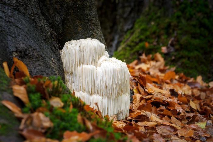 10 грибов, словно пришедших к нам из мира научной фантастики Грибы, Необычное, Длиннопост