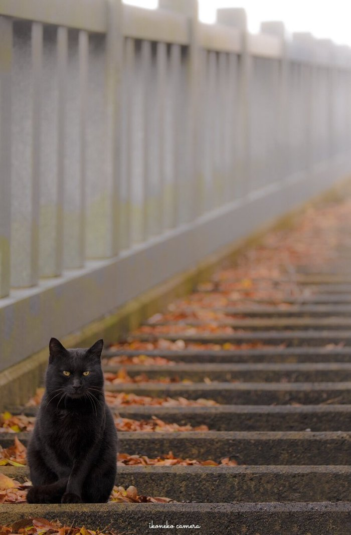 Осенне-черный)