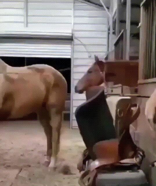 Лошадиный кусь
