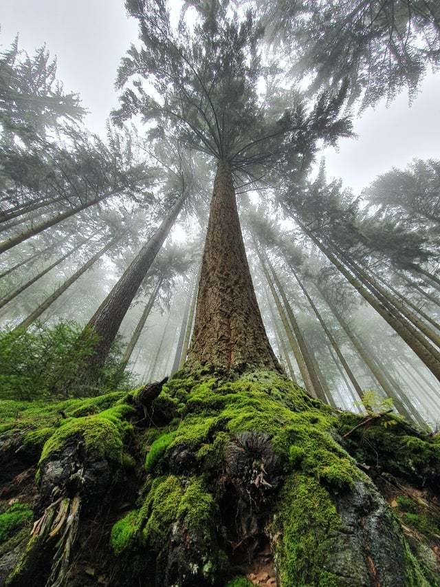 Туманный и дождливый Шварцвальд, Германия