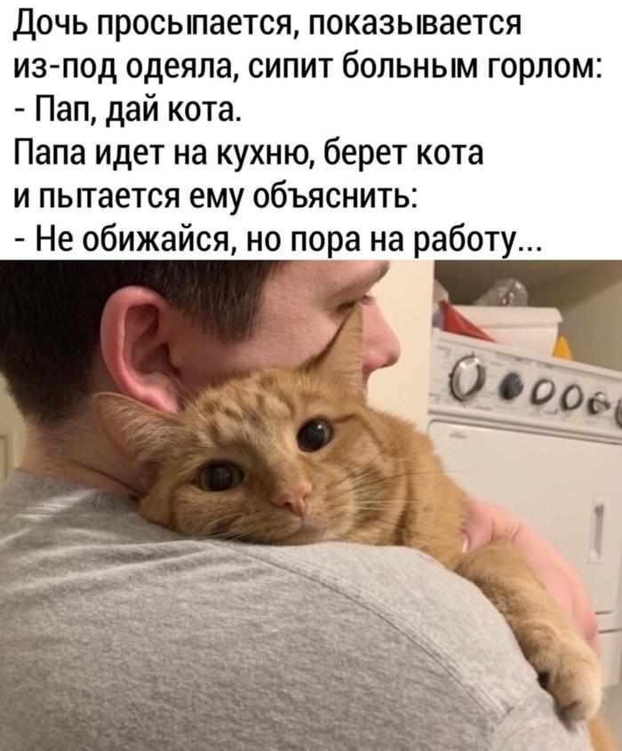 Кот ЛОР