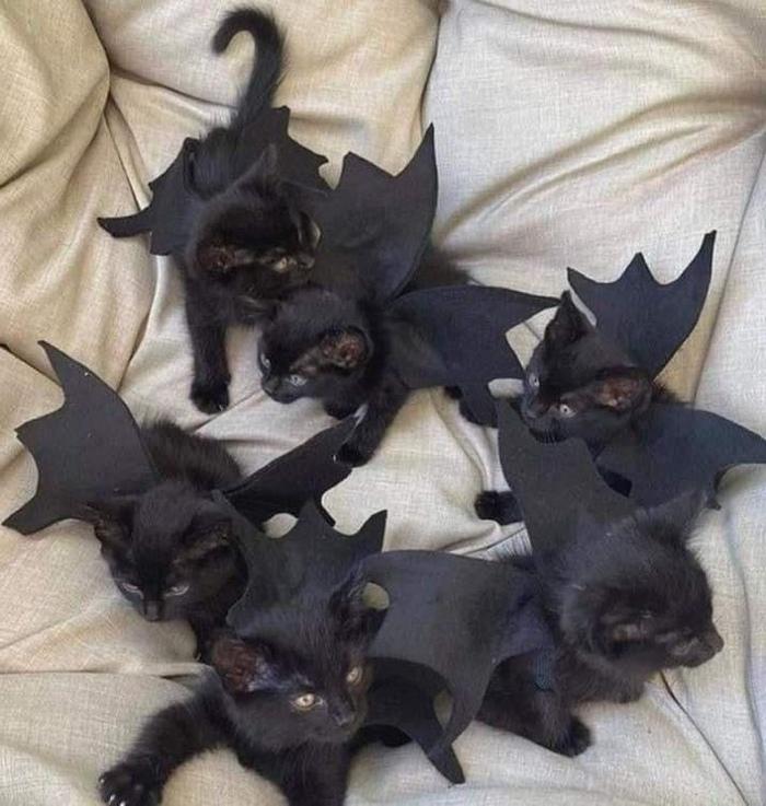 Котошмарики к хэллоуину готовы