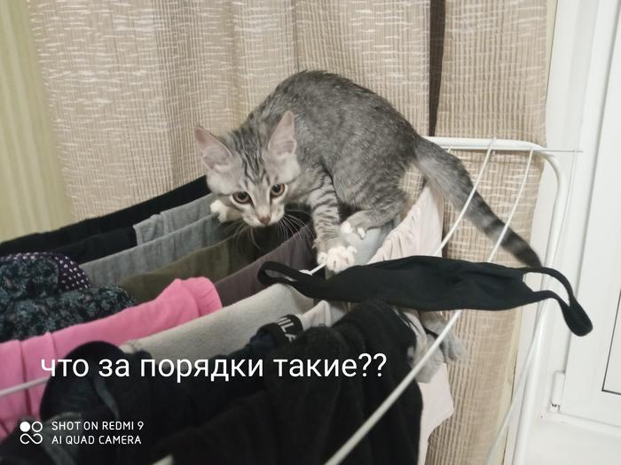 Хозяйственный коть