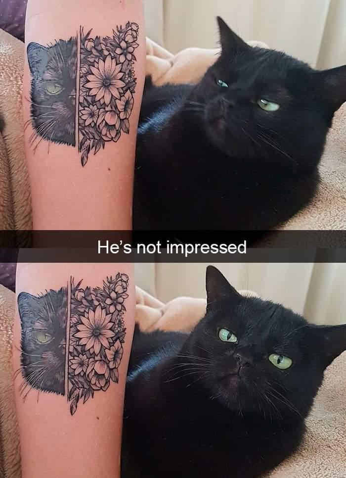 Он не впечатлён