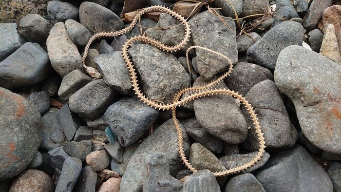 Идеальный скелет змеи