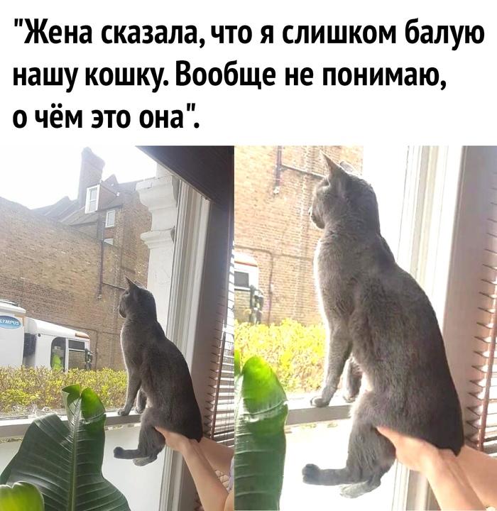 Гляди, котик, что происходит