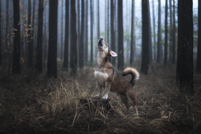 Мой волчонок