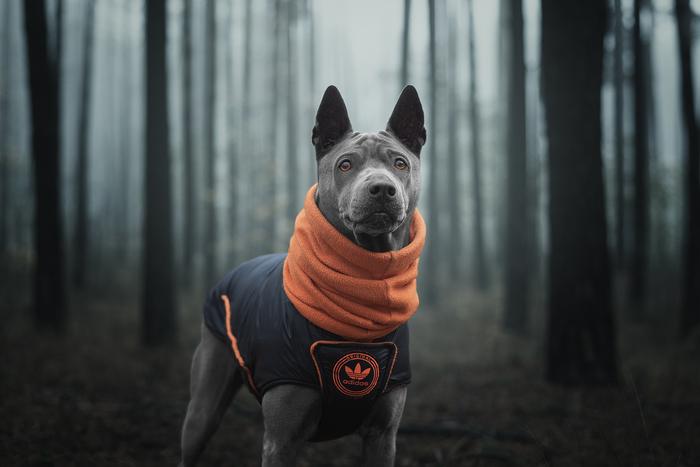 Юна в туманном лесу