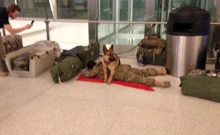 Пес охраняет сон своего уставшего хозяина