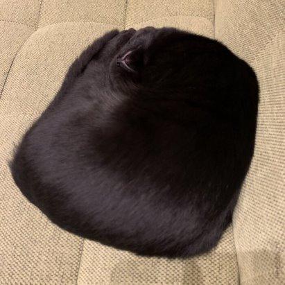 Немалевич. Спящий квадрат
