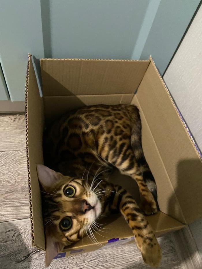 Когда узнал, что коробка не для тебя
