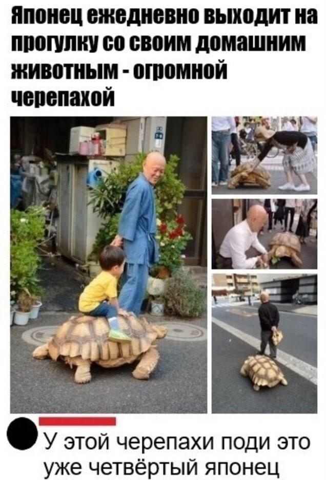 Супер черепаха...