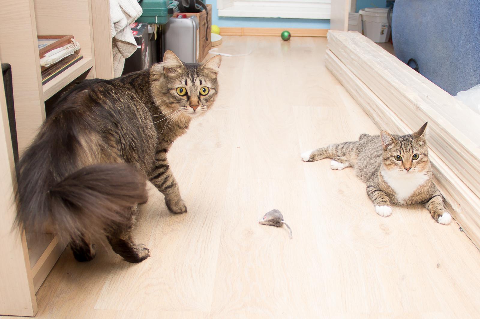 Пиздец котенку больше срать не будет аоткуда пошло