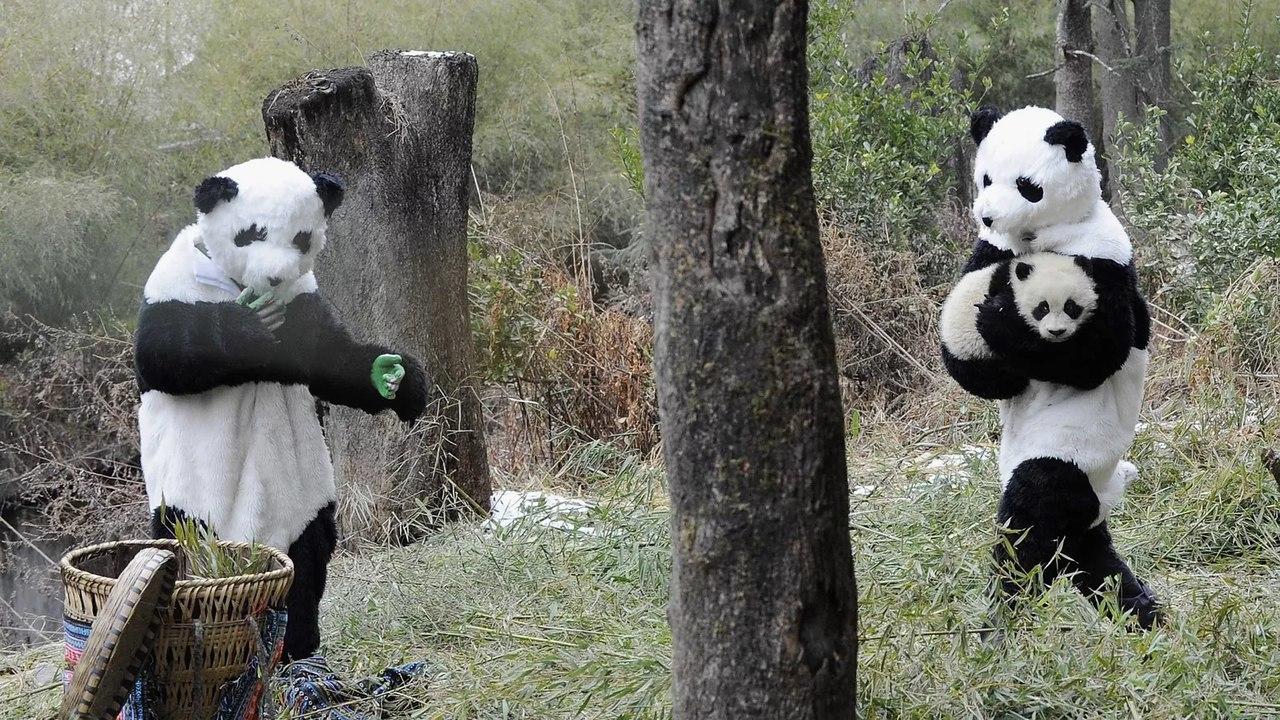 Во что одеть панду