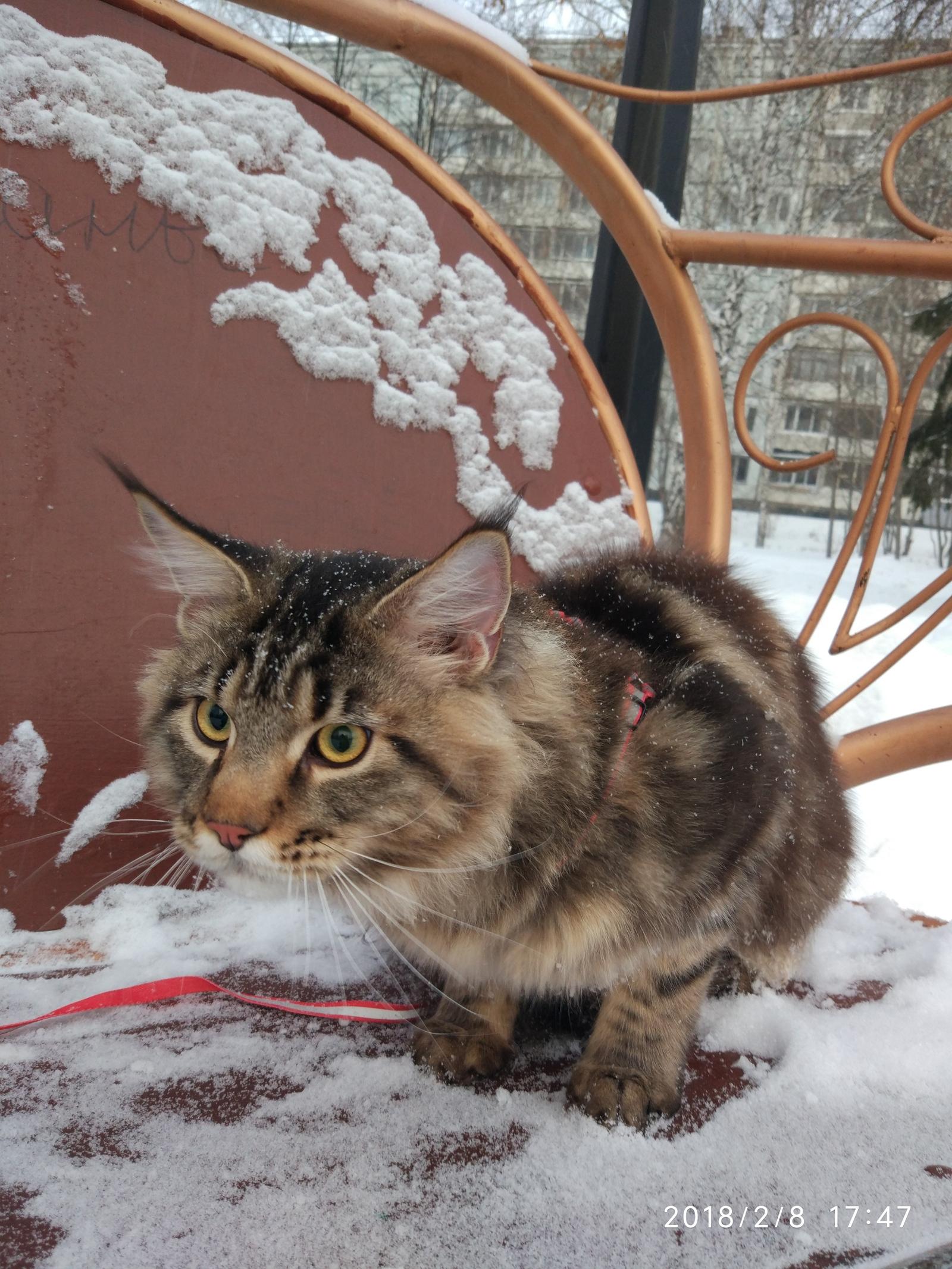 фото мейкуна кота в год