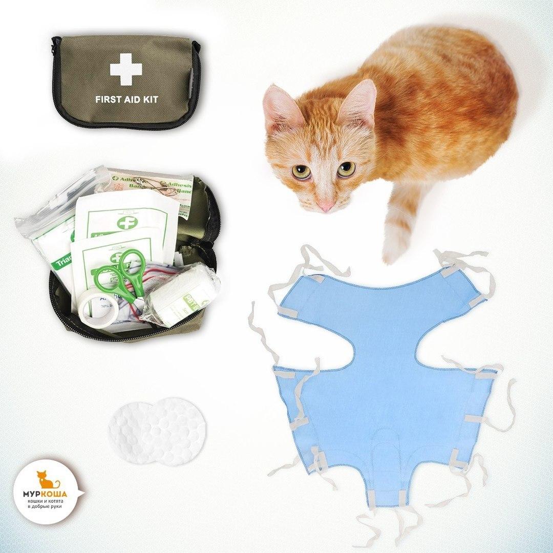 стерелизация кошки