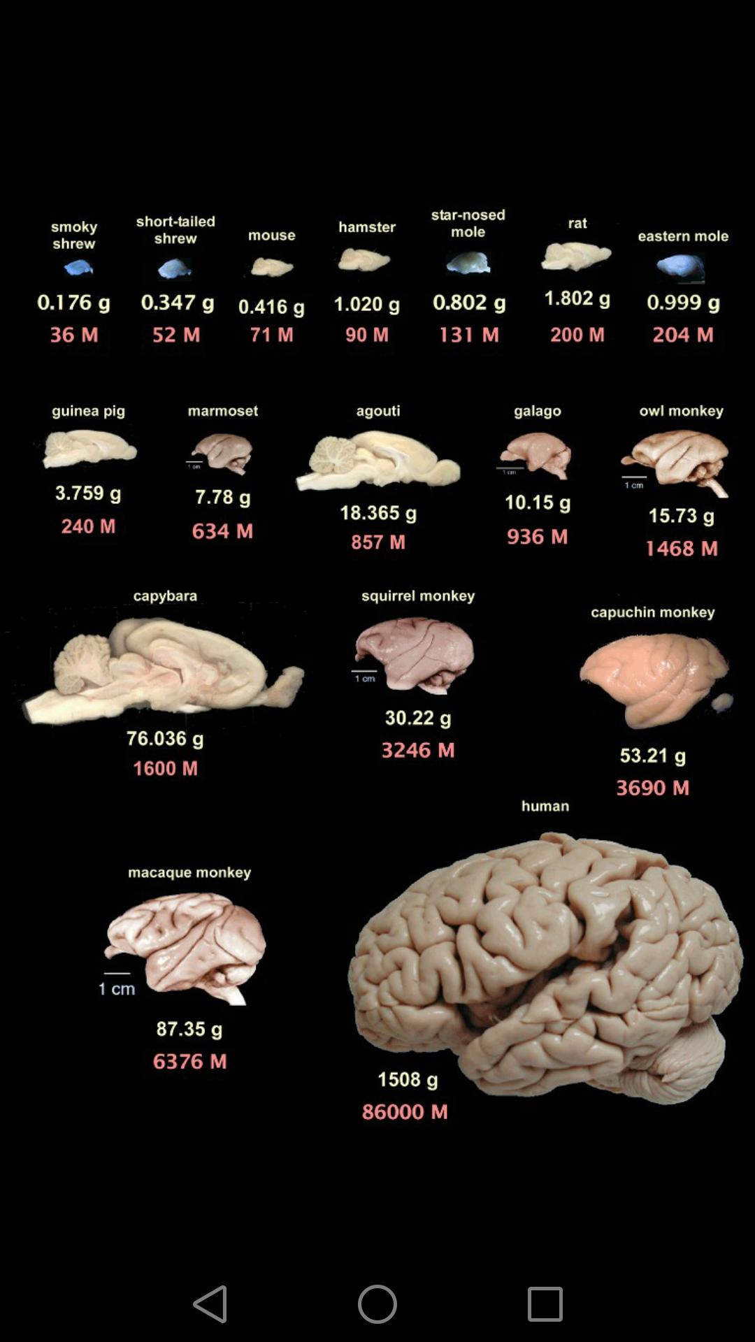 Девушка модель человека по работе мозга модельный бизнес троицк