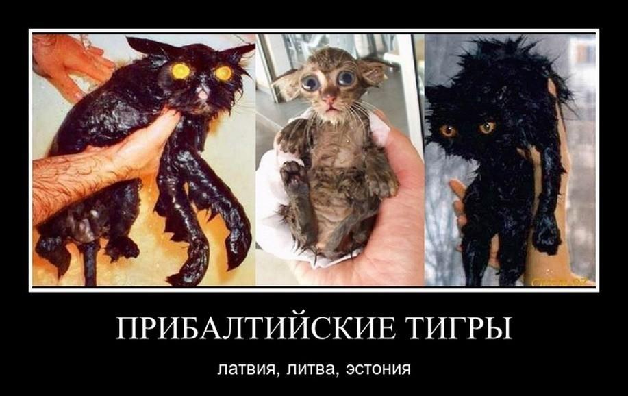 https://cs10.pikabu.ru/post_img/big/2018/07/13/2/153144207717611256.jpg