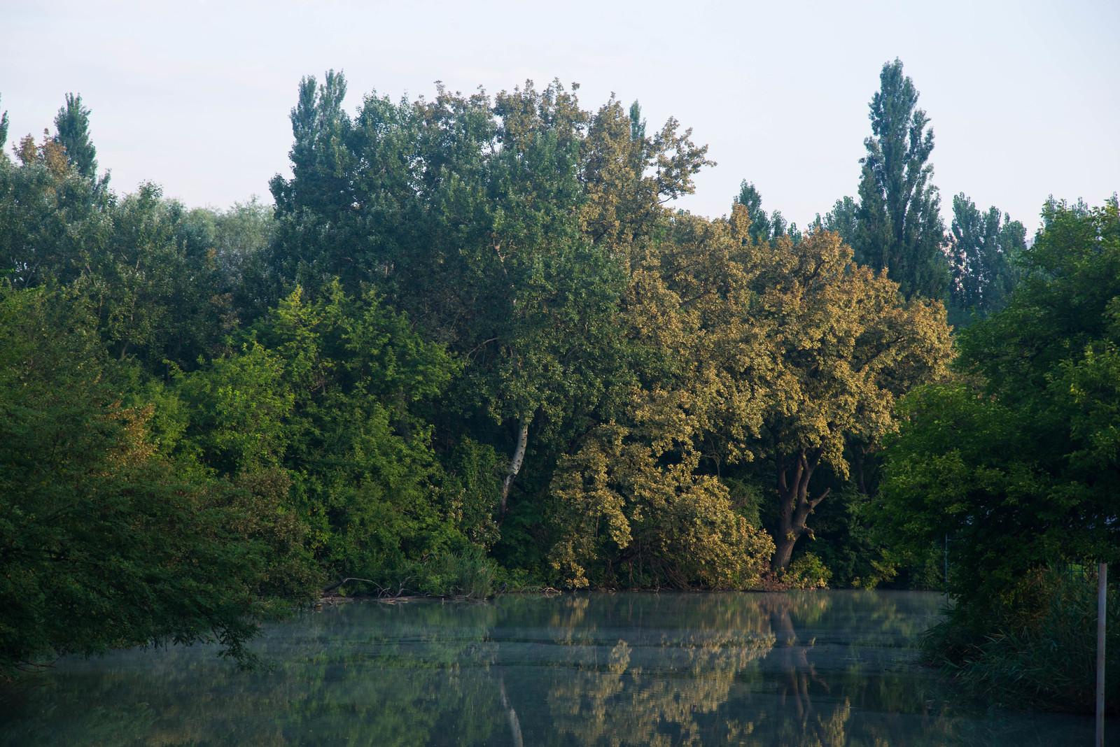 В Краснодаре в парке «Солнечный остров» убрали забор и открыли ... | 1068x1600